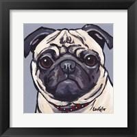 Framed Pug On Gray