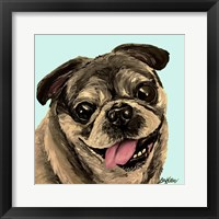 Framed Pug On Turquoise