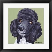 Framed Standard Poodle Tommy