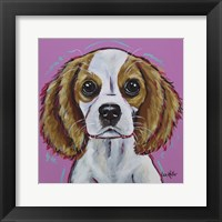 Framed Cavalier King Charles Spaniel 'Love Bug'
