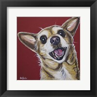 Framed Chihuahua Happy