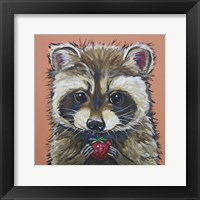 Framed Raccoon Callie