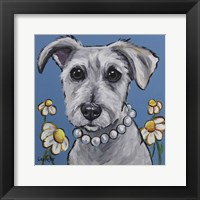 Framed Schnauzer Daisy