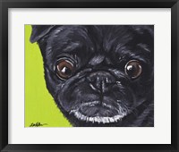 Framed Black Pug On Green