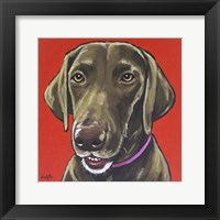 Framed Chocolate Lab On Orange