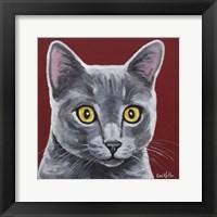 Framed Gray Cat Oliver