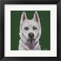 Framed Husky Echo