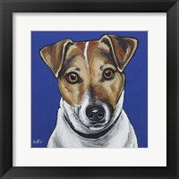 Framed Jack Russell Buster