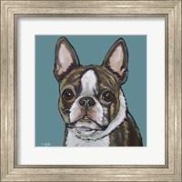 Framed Sasha Boston Terrier On Teal