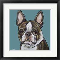 Framed Sasha Boston Terrier On Teal
