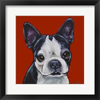 Framed Sophie Boston Terrier On Red