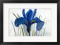 Framed Iris Sings the Blues