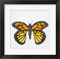 Framed Butterfly Collection Monarch