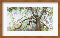 Framed Southern Live Oak Tree