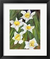 Framed Daffodils with Nodding Heads