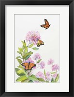 Framed Milkweed and Monarch Butterflies