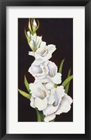 Framed Stem of Gladiolus