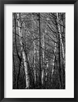 Framed Black & White Natural