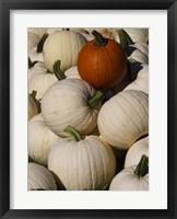 Framed White Pumpkins