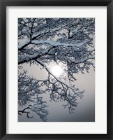 Framed Winter 1