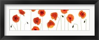 Framed Row of Poppies on White