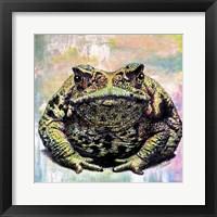 Framed Toad Color
