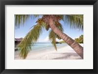 Framed Bowed Palm