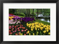 Framed Colorful Corner Keukenhof Tulips Garden 1