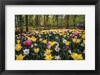 Framed Colorful Corner Keukenhof Tulips Garden 2