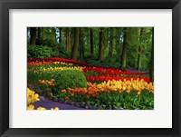 Framed Colorful Corner Keukenhof Tulips Garden 3