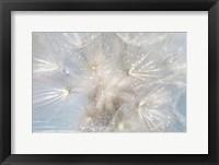 Framed Ethereal Lightness