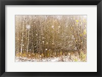 Framed First Snowflakes