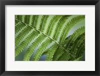 Framed Healing Art Fern Leaf After Rain