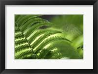 Framed Healing Art Fern Leaf