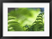 Framed Healing Art Fern Leaves