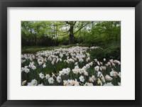 Framed Keukenhof Botanical Daffodils Garden
