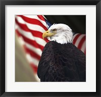 Framed Bald Eagle And US Flag