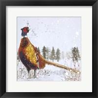 Framed Christmas Pheasant