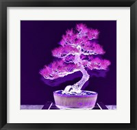 Framed Purple Flame Bonsai