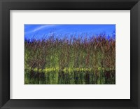 Framed High Grass Blue Sky
