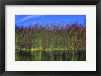 Framed High Grass Blue Sky