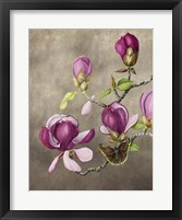 Framed Magnolia and Butterfly