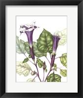 Framed Mr Purple