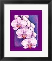 Framed Phalaenopsis Orchids