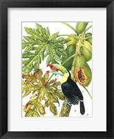 Framed Toucan in Papaya Tree