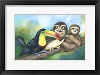Framed Toucan Owl Sloth