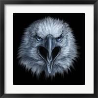 Framed Eagle Face