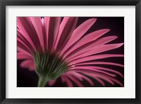 Framed Flower 18