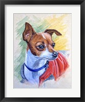Framed Chihuahua With Red Coat