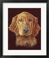 Framed Linus Retriever Dog